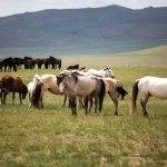 кони кумысолечение